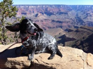 BJ Nemeth dog Rhapsody Grand Canyon