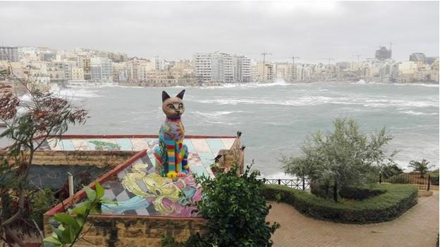 Maltese cat