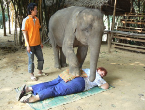 Linda Johnson elephant massage