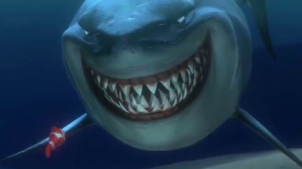 Nemo shark fish