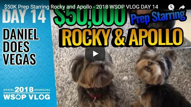 Negreanu puppies Rocky Apollo